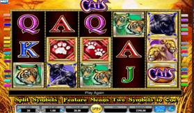 Cats Slot Screenshot